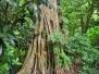 VANUATU: Ambryn