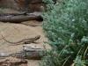australia_australia_zoo_0011