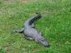 australia_australia_zoo_0016