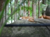 australia_australia_zoo_0021