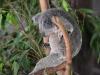 australia_australia_zoo_0031