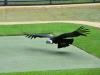 australia_australia_zoo_0056