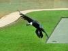 australia_australia_zoo_0061