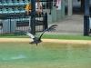 australia_australia_zoo_0066