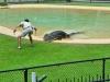 australia_australia_zoo_0076