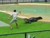 australia_australia_zoo_0081