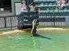 australia_australia_zoo_0091