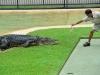 australia_australia_zoo_0096