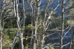cradle_mountain_010