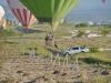 goereme_heissluftballons_0001