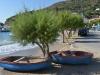 greek_one_0091
