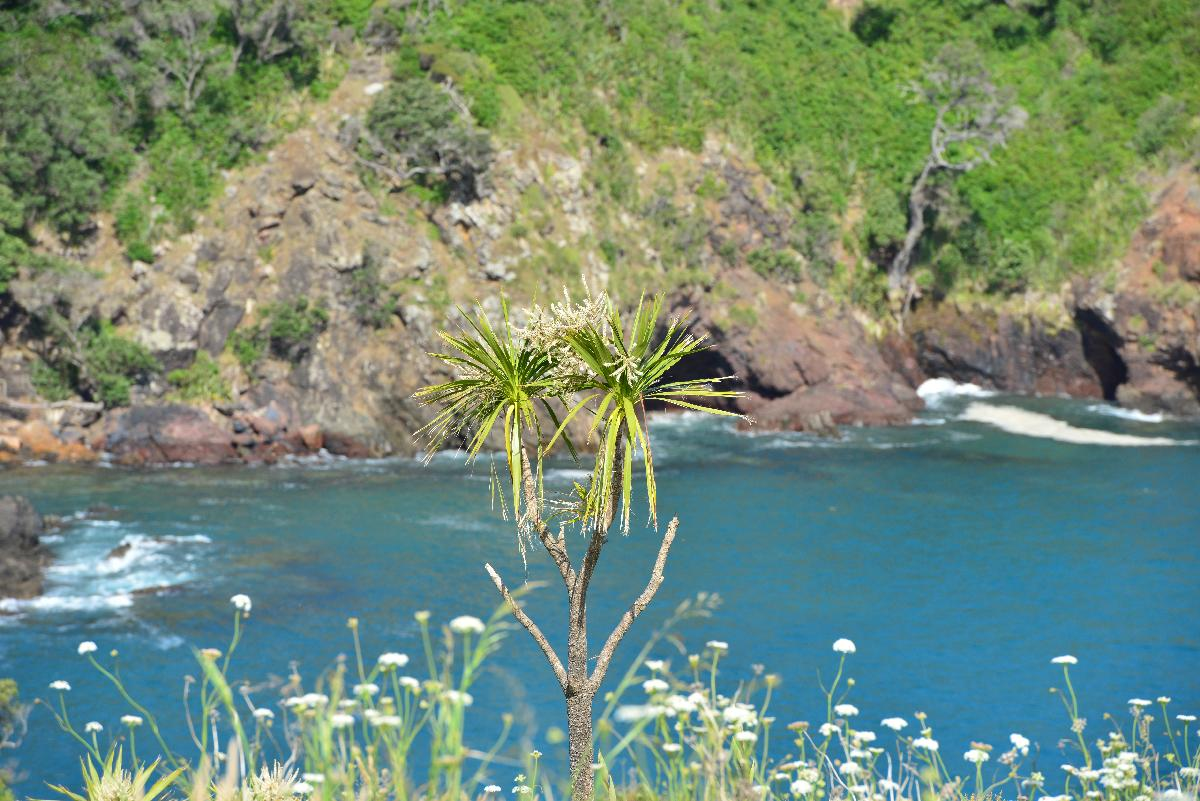 newzealand_2_0051
