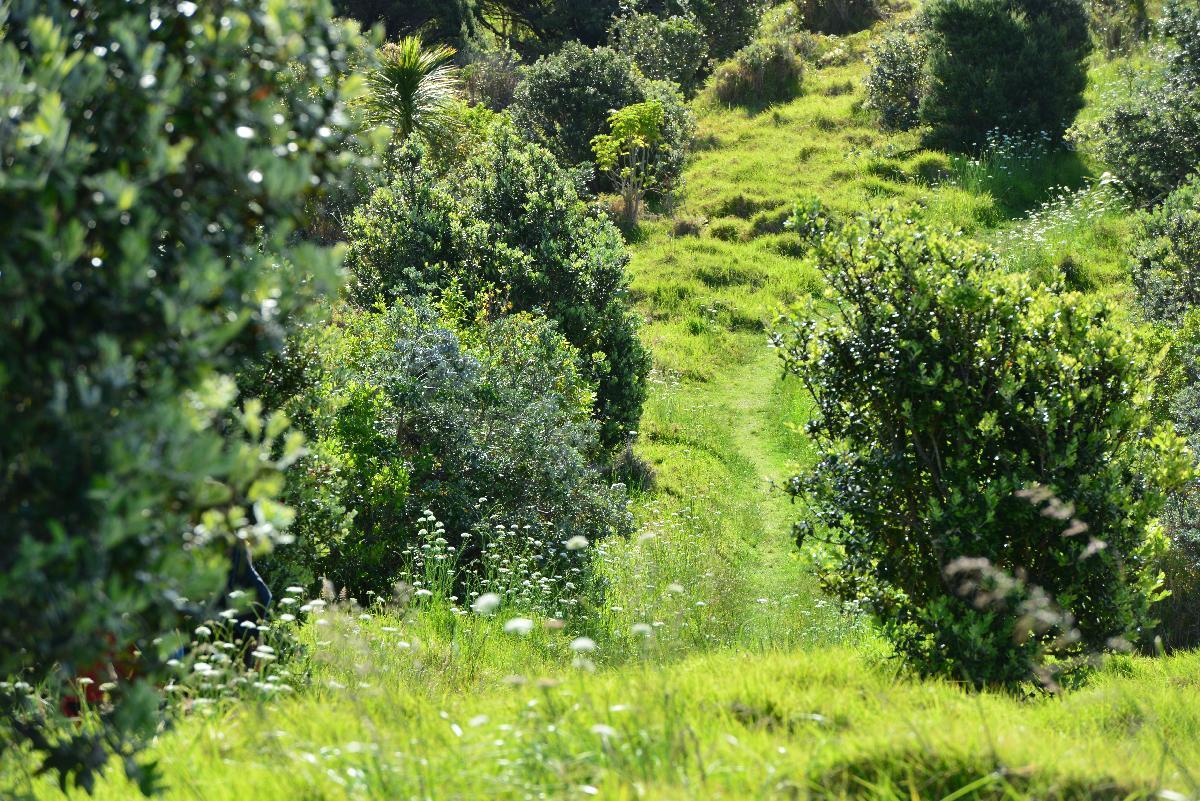 newzealand_2_0066