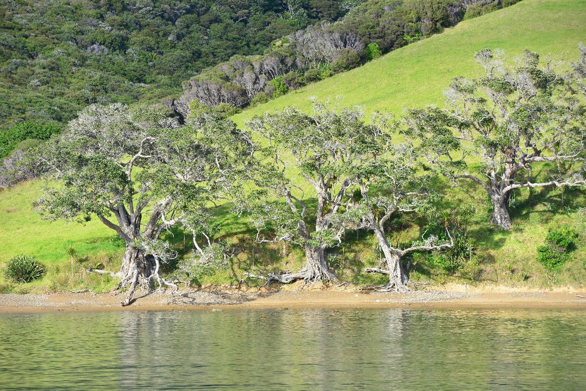 newzealand_2_0071