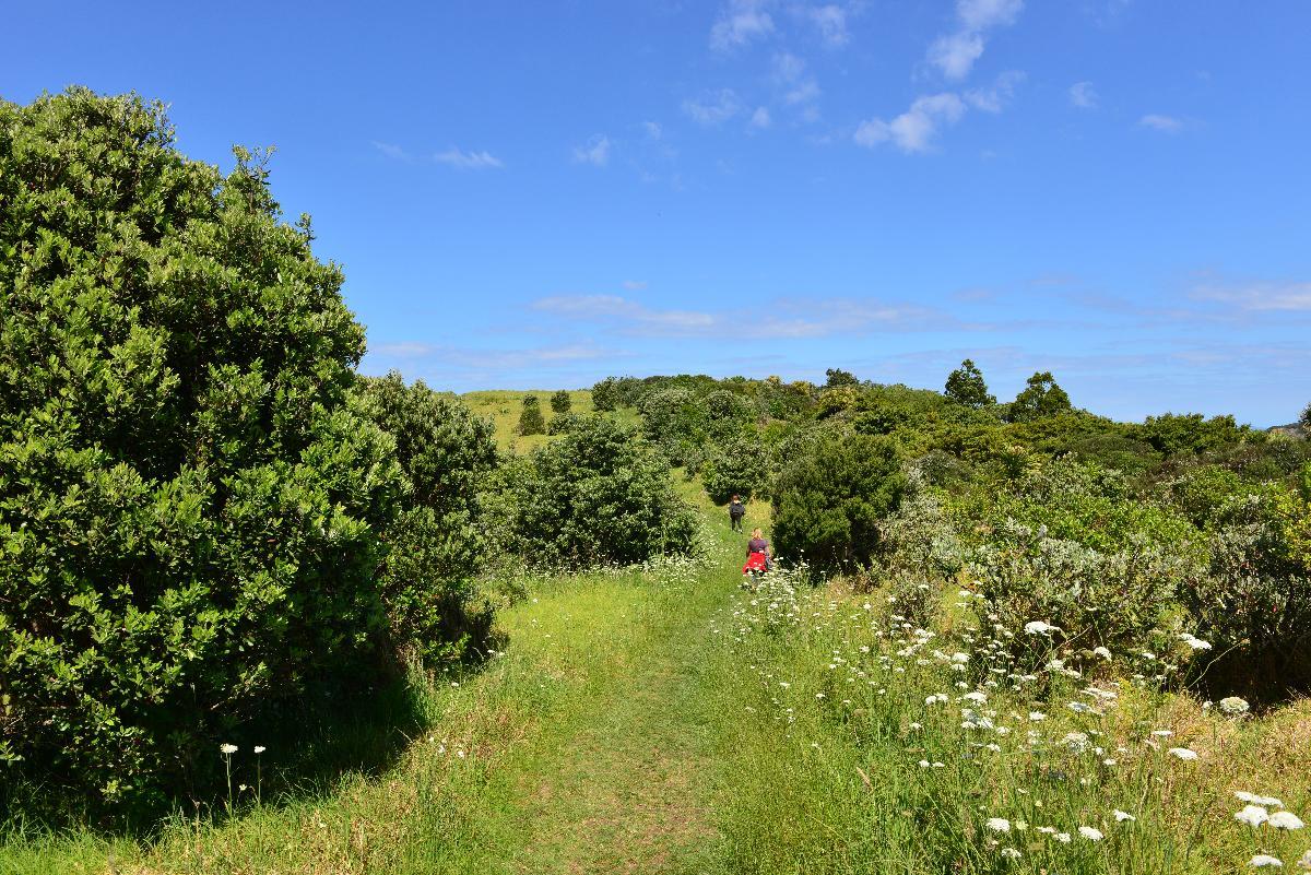 newzealand_2_0186