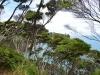 newzealand_2_0116