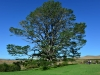 newzealand_matamata_hobbiton_0106