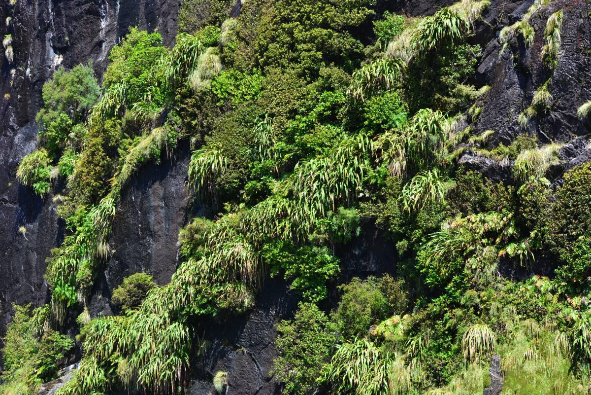 newzealand_milford_sound_0076