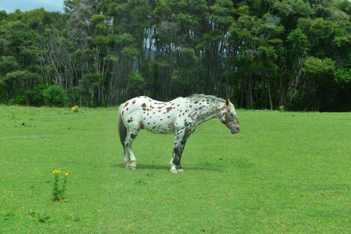 newzealand_titirangi_0001