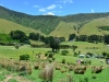 newzealand_titirangi_0026