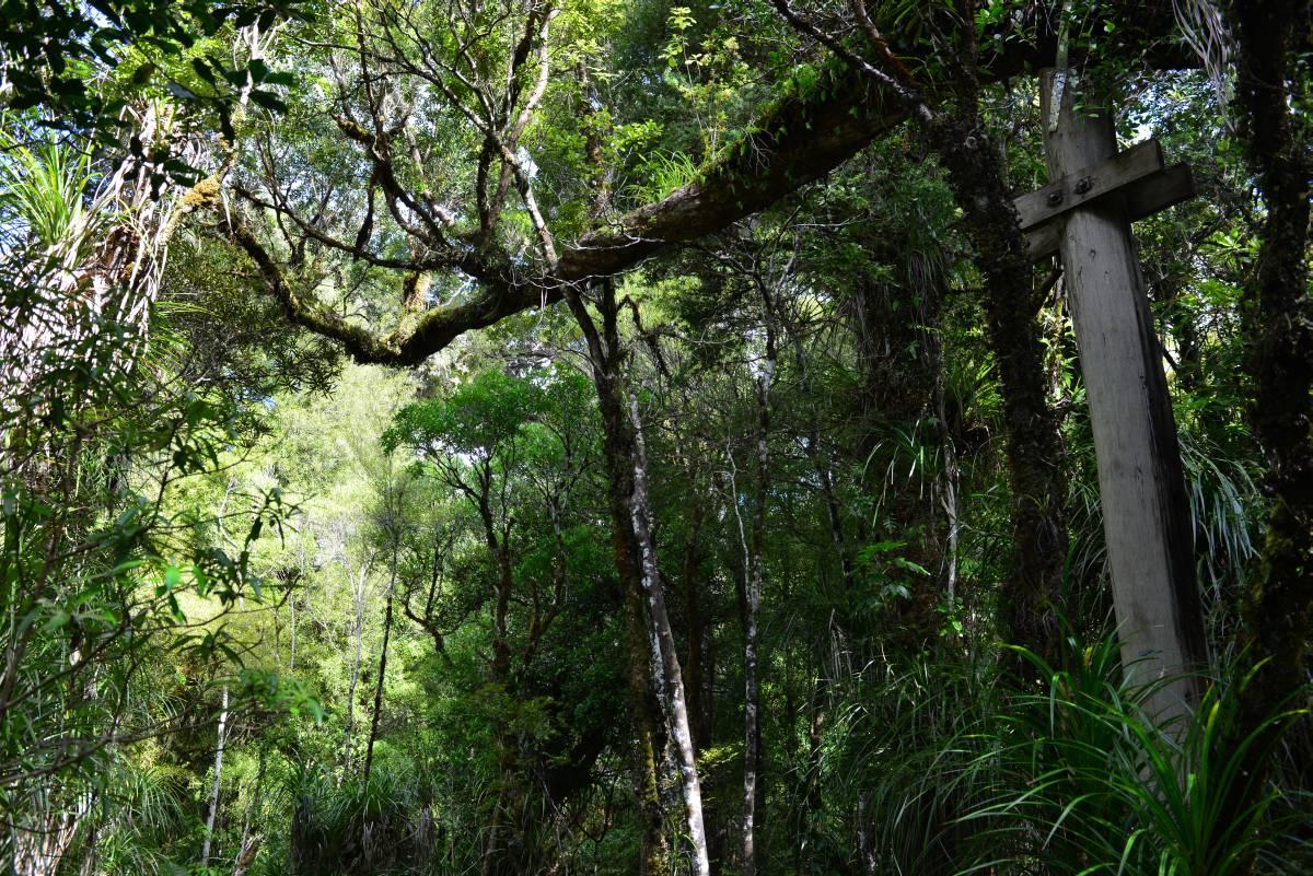 nz_cap_reinga_to_waipoua_forest_0076
