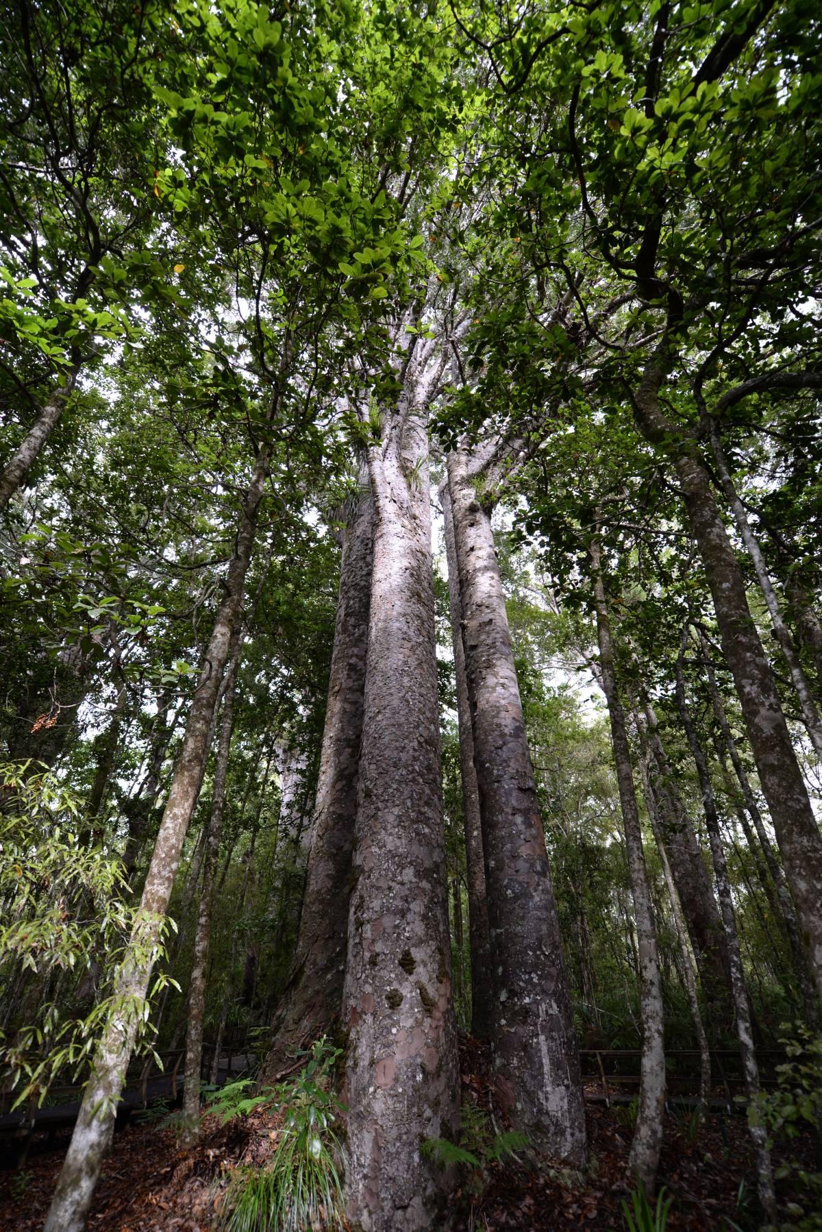nz_cap_reinga_to_waipoua_forest_0111