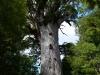 nz_cap_reinga_to_waipoua_forest_0081
