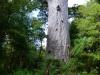 nz_cap_reinga_to_waipoua_forest_0086