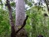 nz_cap_reinga_to_waipoua_forest_0091