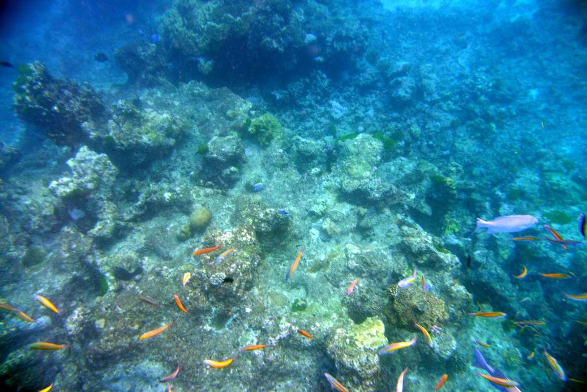 similan_island_x_0086