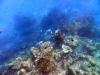 similan_island_x_0041