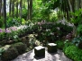 singapore_botanicgarden
