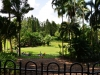 singapore_botanicgarden_0001