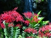 singapore_botanicgarden_0021