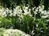 singapore_botanicgarden_0031