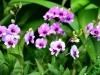 singapore_botanicgarden_0036