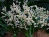 singapore_botanicgarden_0056