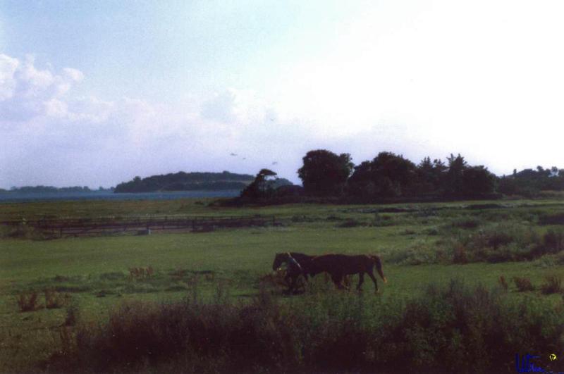 sommer2003_117