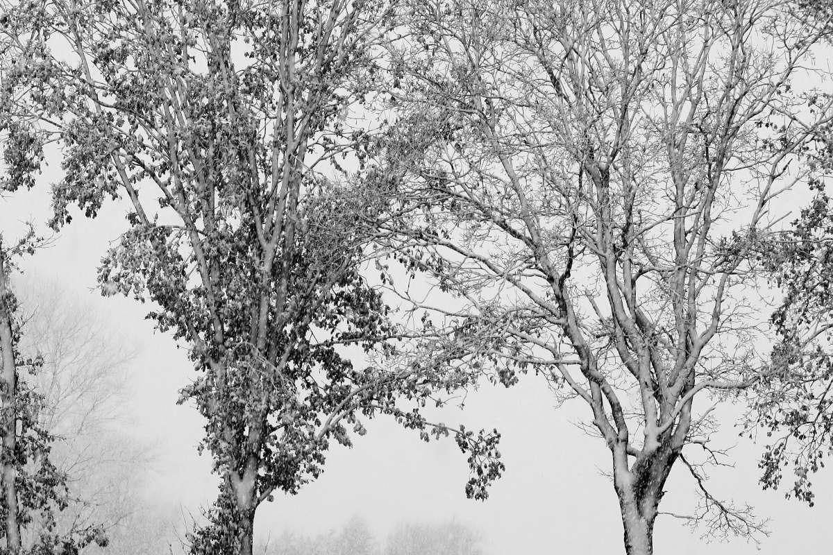 winter2017_so_far_013