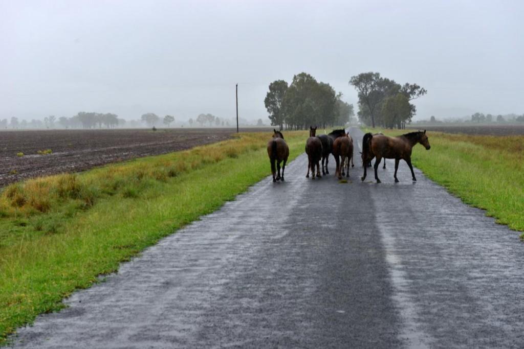Pferde CARNARVON