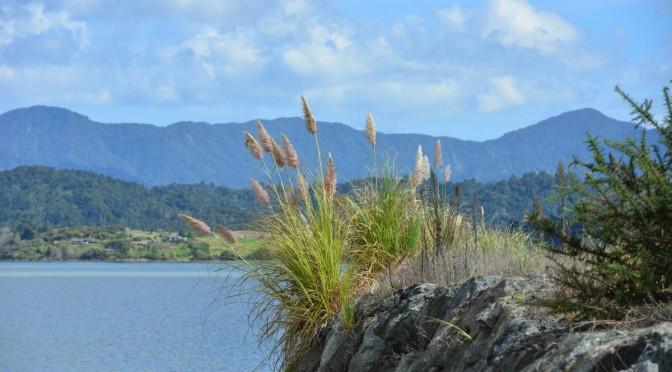 Tag 37+38: CAP REINGA nach WAIPOUA FOREST