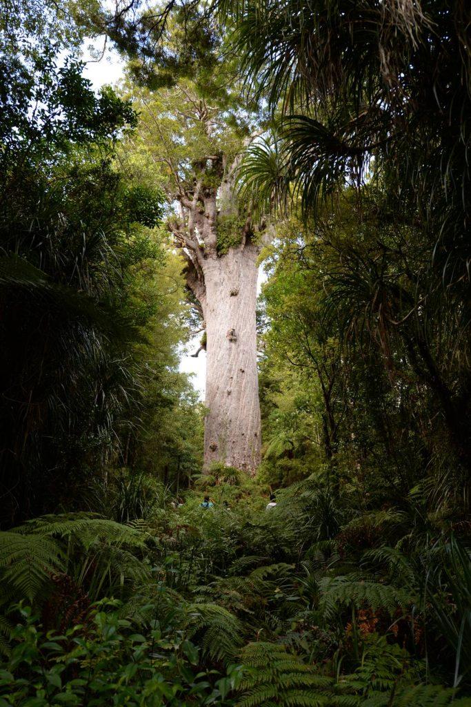 nz_cap_reinga_to_waipoua_forest_0106