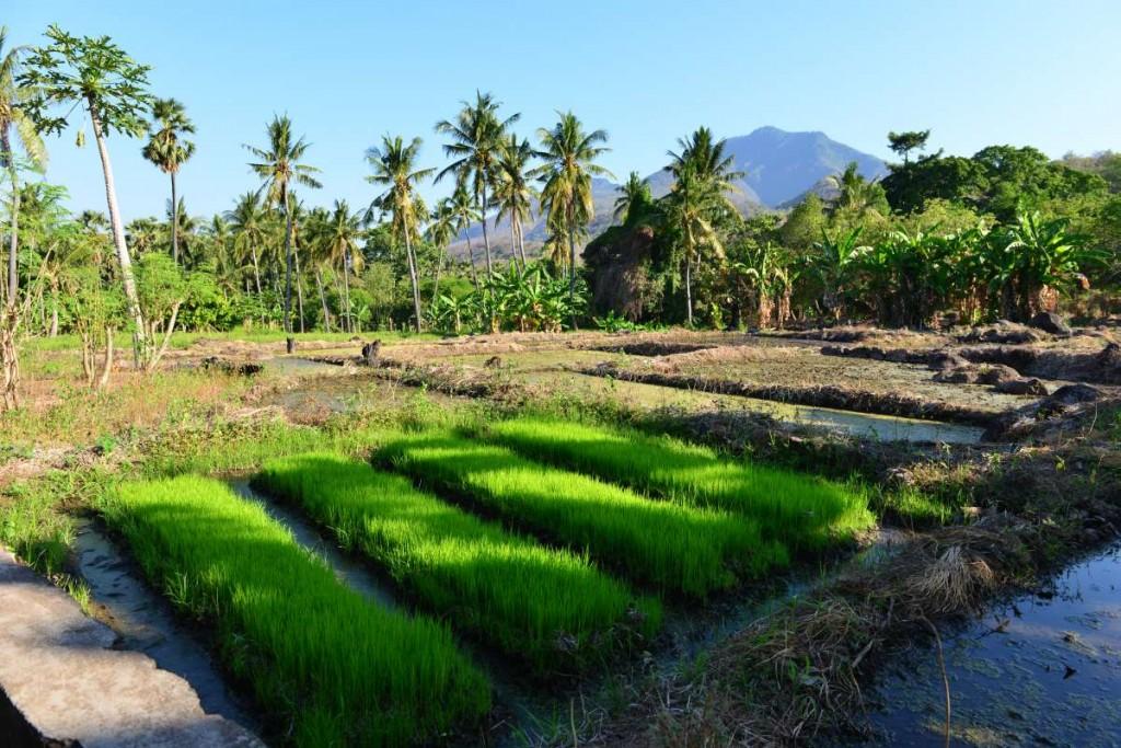 Indonesia_larantuka_0091