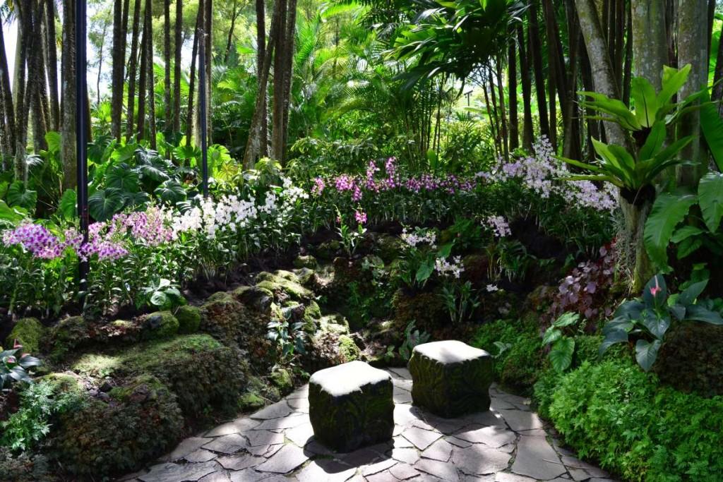 singapore_botanicgarden_0066