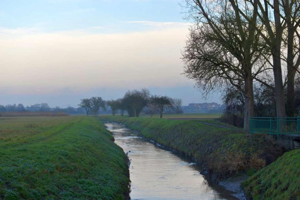 Rheinaue bei Mannheim